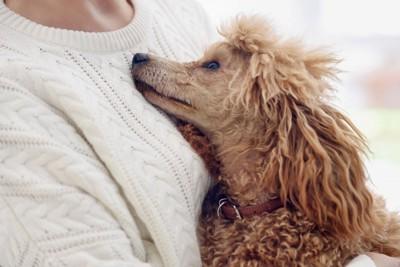 人にくっつく茶色の犬