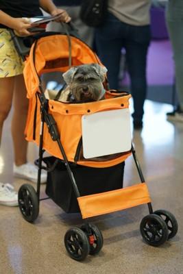 オレンジ色のペットカートに乗る犬