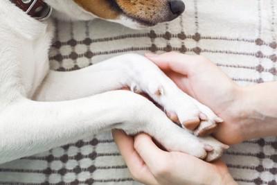 横になった犬の足を触る人の手