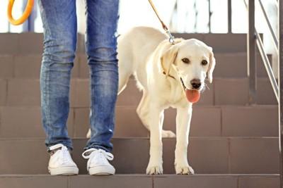 階段を降りない犬
