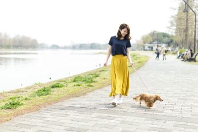 川沿いの道を散歩する女性とダックスフンド