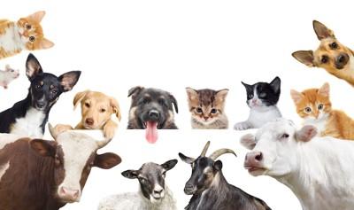 犬、猫、牛、羊、ヤギ