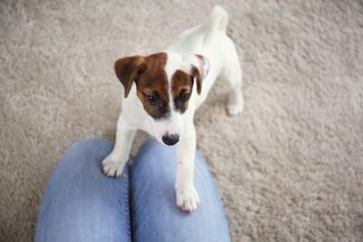飼い主の足の上に乗ろうとしている犬