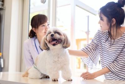 診察台に乗る犬と獣医師と話す飼い主