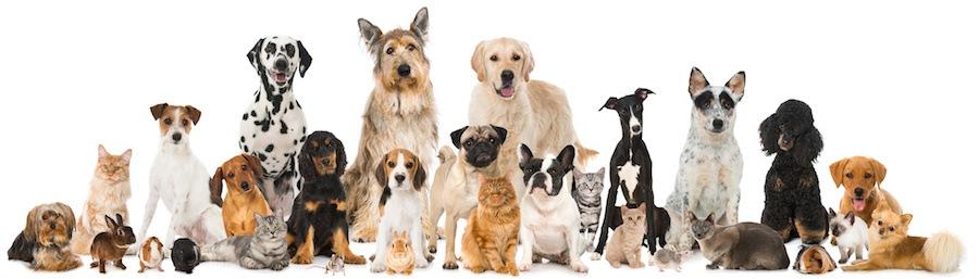 いろいろな種類の犬たち