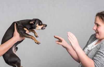抱き上げられて牙をむく犬を怖がる女性