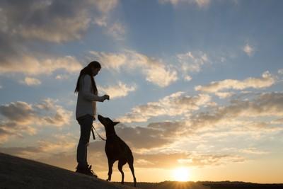 夕日と飼い主に寄り添う犬のシルエット