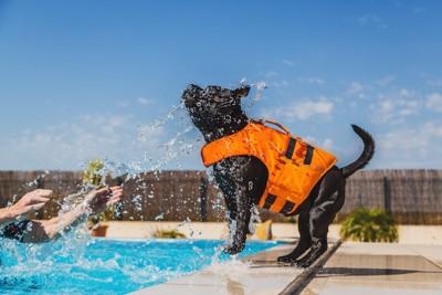 オレンジのライフジャケットを着た黒い犬