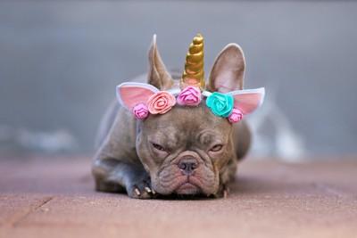 頭に飾りをつけられて不満そうな犬