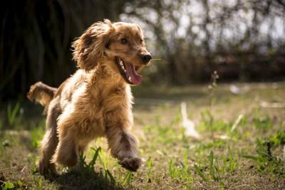 走り回る犬