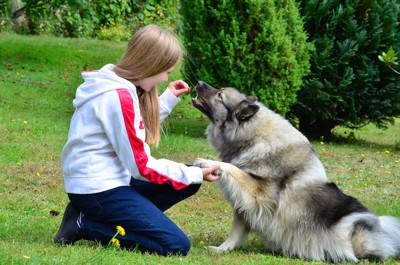 お手をする犬とオヤツをあげる少女