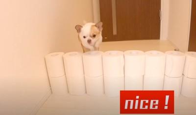 2段目を飛ぶ犬