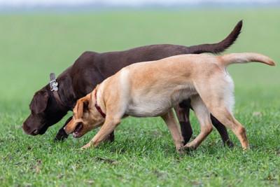 匂いをたどる犬たち