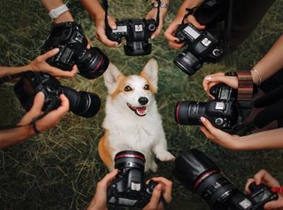 カメラを近づけられる犬