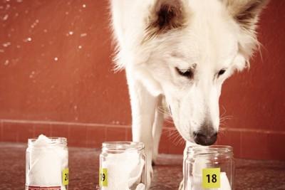 瓶の匂いを嗅ぐ犬