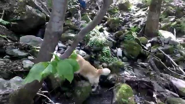 葉っぱで隠れる犬