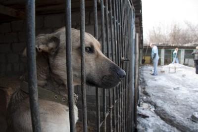 檻に入っている犬