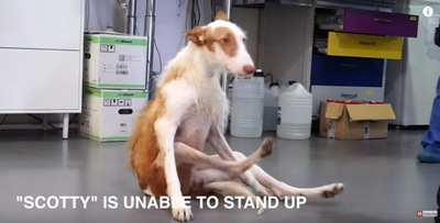 床に腰で座る犬