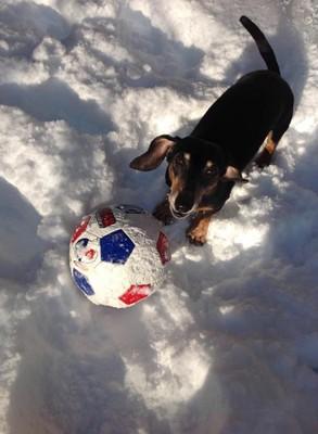 雪の中のわんちゃんたち