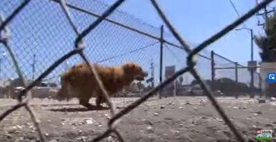フェンスの内側を走る犬