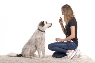 指示される犬