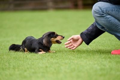 犬を触ろうとする人の手