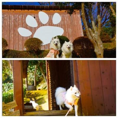 小屋の前の犬