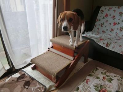 木製ステップと犬の横長写真