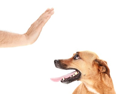犬にストップの指示を出す人の手