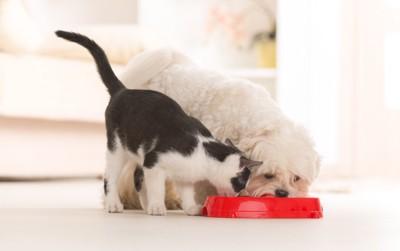 一緒に食事をする犬と猫