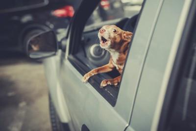 車の外を見る犬