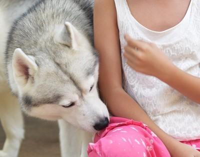 飼い主の匂いを嗅ぐハスキー犬