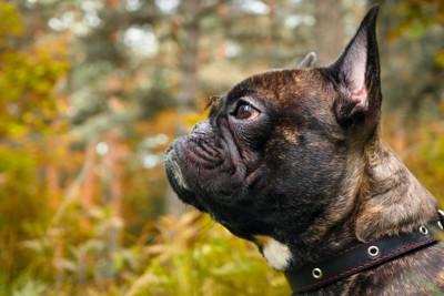 鼻の頭に蚊が止まる犬