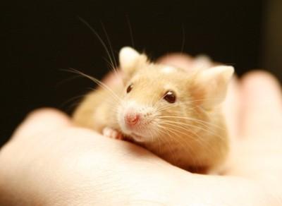 手のひらの上のマウス