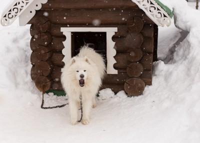 ワンコハウスと白い犬