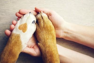 人の手のひらに乗せられた犬の手