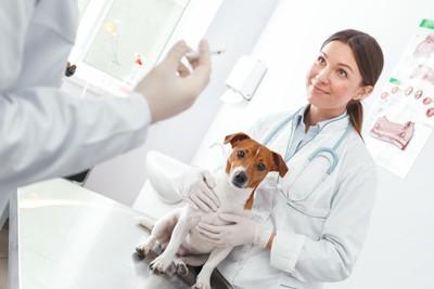 病院で注射を待つ犬と獣医師