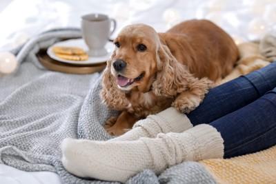ブランケットの上で飼い主とリラックスする犬