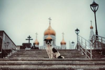 教会を背にして座る犬