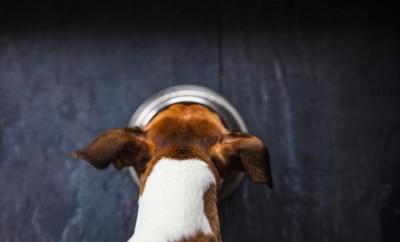 食事中の犬の後頭部