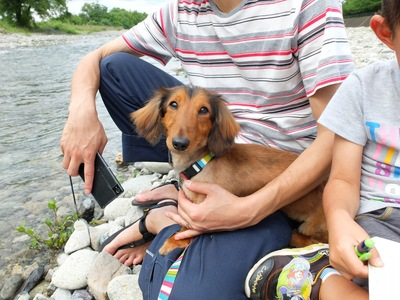 ソファで寛ぐ男性と犬