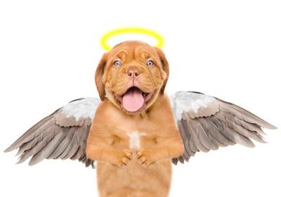 天使の羽と輪をつけた犬