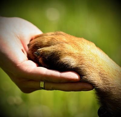 信頼し合っている飼い主と犬