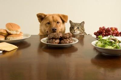 ご飯を狙う犬と猫