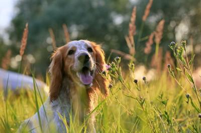 草花の中を歩いている犬