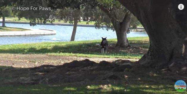 公園に捨てられた犬