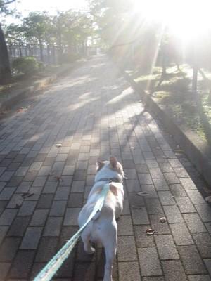 白フレが前向きに歩く写真