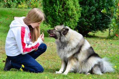 アイコンタクトの練習をする飼い主と犬