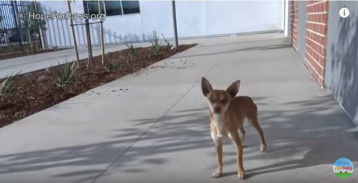 近づいてきた犬