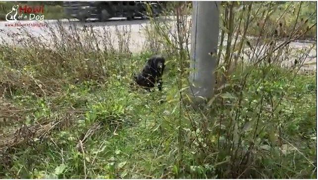 道路脇の犬